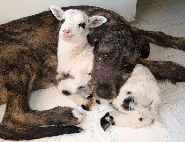 «- Ну, и собаку вы купили! Иди ко мне, горе ты мое, пожалею» - подборка уморительных фото животных!