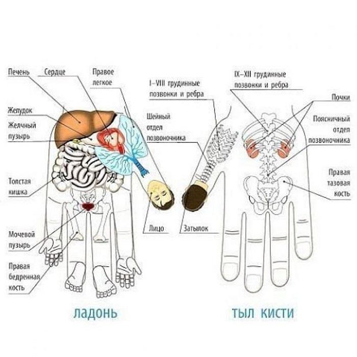 Каждый палец отвечает за 2 органа: эффективный японский метод лечения разных заболеваний