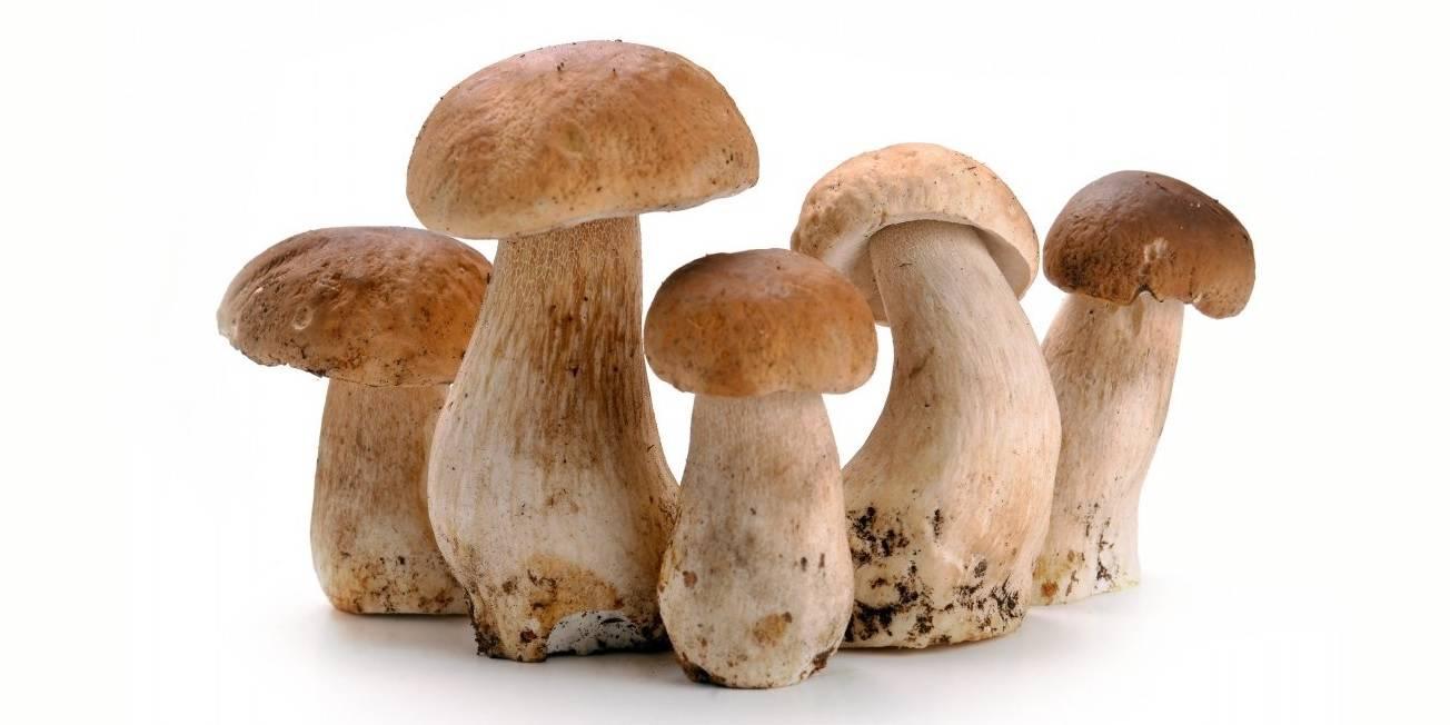 Белые грибы растут на подоконнике. Срезала – и в картошку или суп: не нужно бежать в магазин