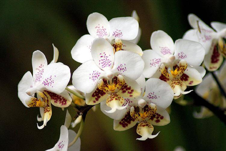 9 важных правил по уходу за орхидеей, гарантирующих буйный цвет на протяжении всего года
