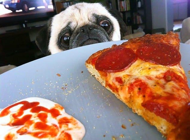 Смешные картинки еды и животных, кошек собак