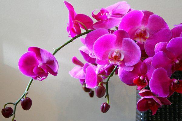 7 важных секретов по уходу за орхидеями, чтобы цветы цвели как можно дольше