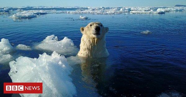 Во время экскурсии по Арктике члены экипажа круизного судна з@стрелили белого медведя, чем вызвали гнев и шумиху в сети