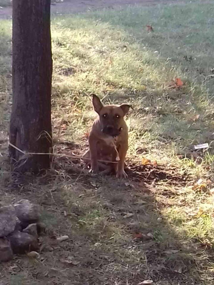 История о верности и предательстве – в парке нашли собаку, привязанную к дереву, а рядом записку…