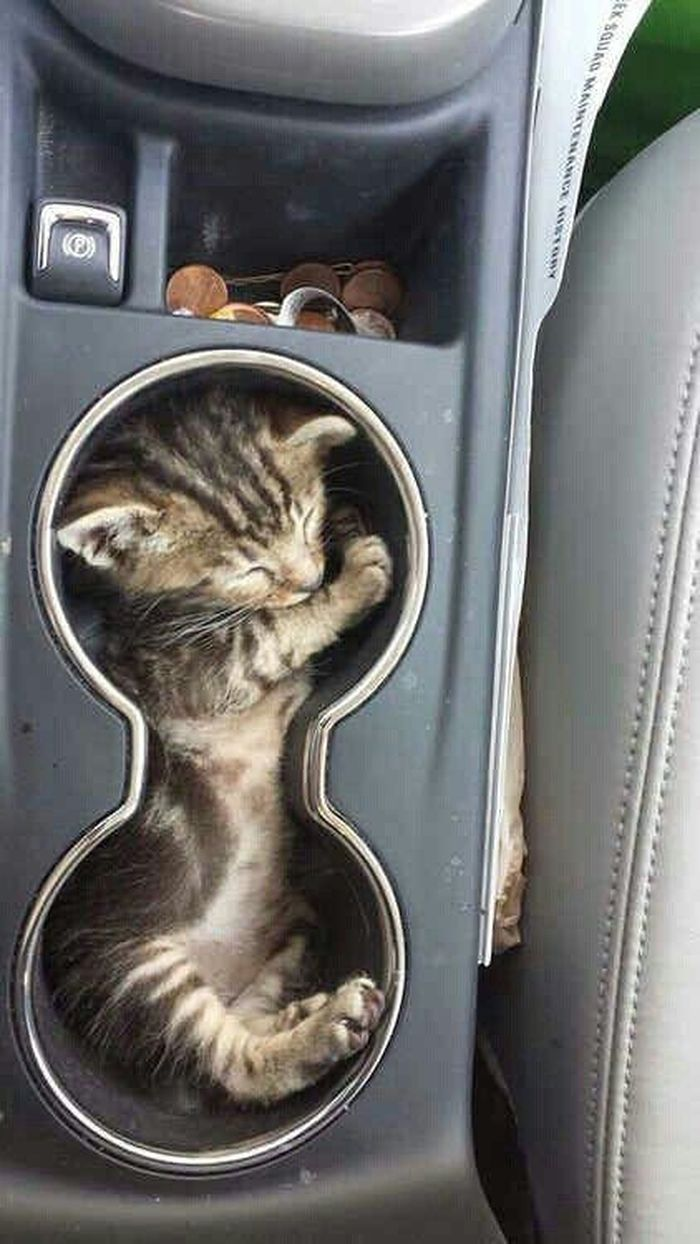 Самые уморные фото кошачьих, уснувших в совершенно невообразимых позах