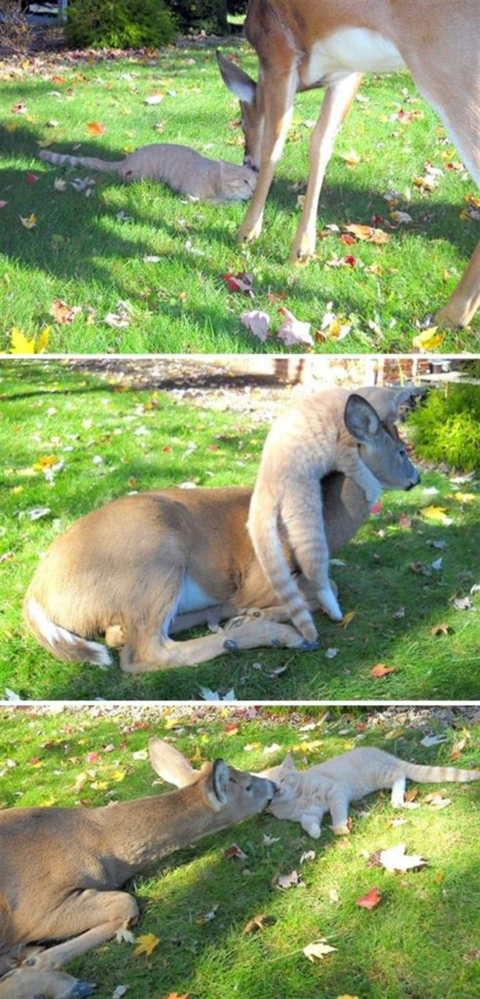 10 фото животных, которые пришли однажды к людям в гости, но решили остаться навсегда