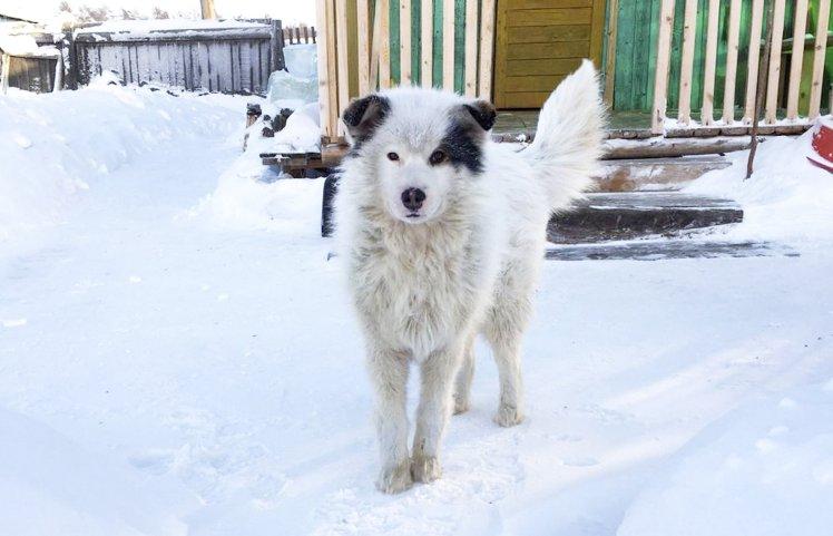 В снегу замерзала собака, а когда люди попытались ее спасти, нашли то, что она прятала под собой