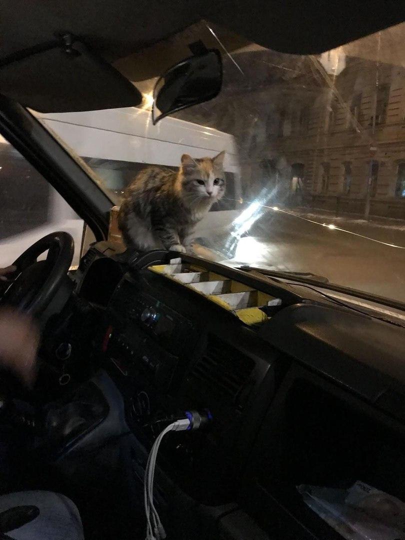 Кошка, боясь замерзнуть, запрыгнула на маршрутку… А водитель решил поступить с животным как настоящий человек