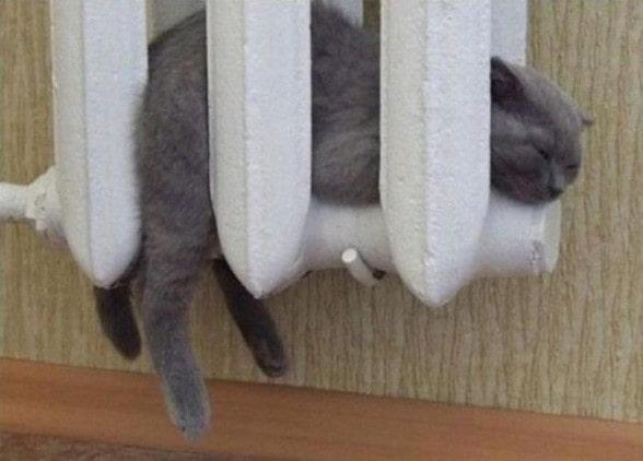 Пятнадцать неожиданных мест, в которых кота увидеть вы точно не ожидали