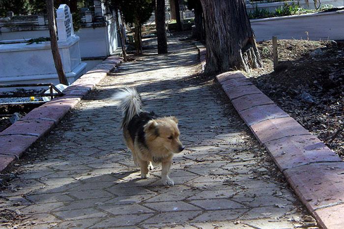 Сердце мужчины было вдребезги разбито, когда он увидел, куда каждый день убегает его пес