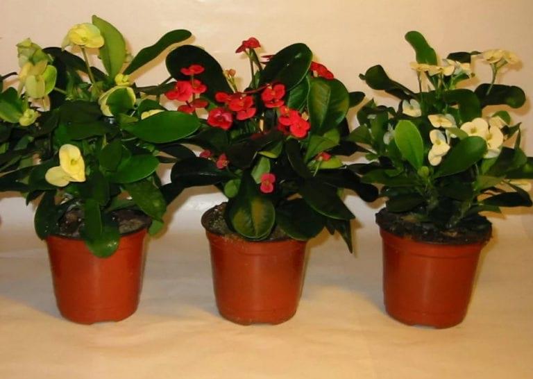 Советы опытных флористов: 7 крутых средств для постоянного цветения и бурного роста комнатных растений