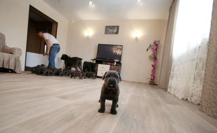 Мать-героиня из Воронежской области: собака умудрилась родить 19 щенков и стать рекордсменкой