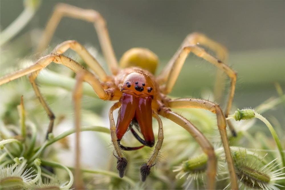 Это нужно прочесть всем: из-за потепления в Украине уже есть опасный средиземноморский паук
