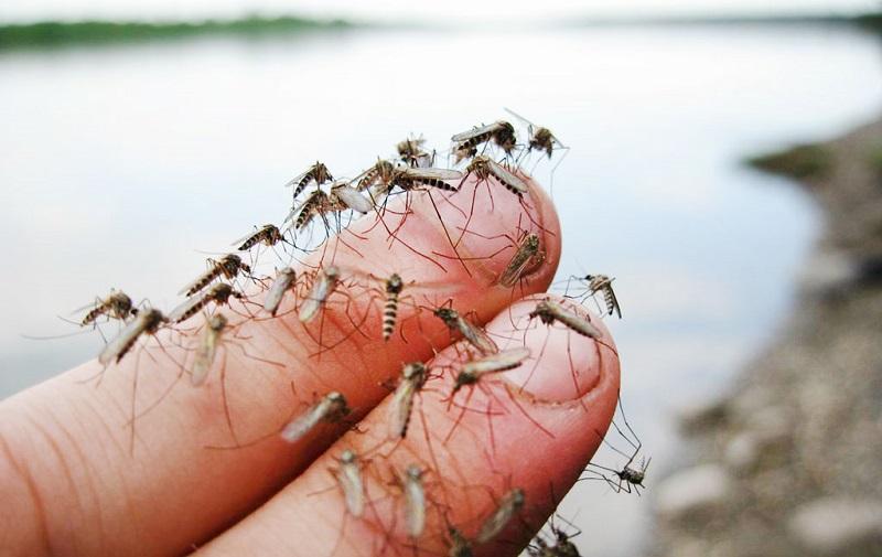 Простая и эффективная ловушка от комаров, сделанная самостоятельно – 5 минут и кровососов как не бывало