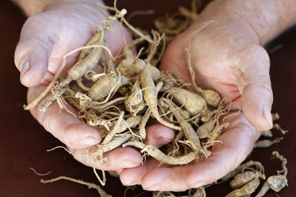 Травы, которые способны проникать в суставы и эффективно восстанавливать хрящи лучше химии